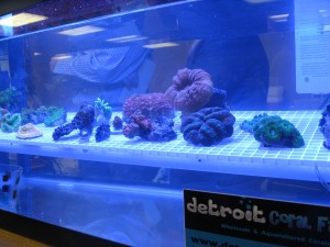 2012 Michigan Coral Expo and Swap