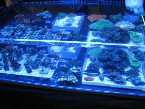 Choosing lighting for your aquarium