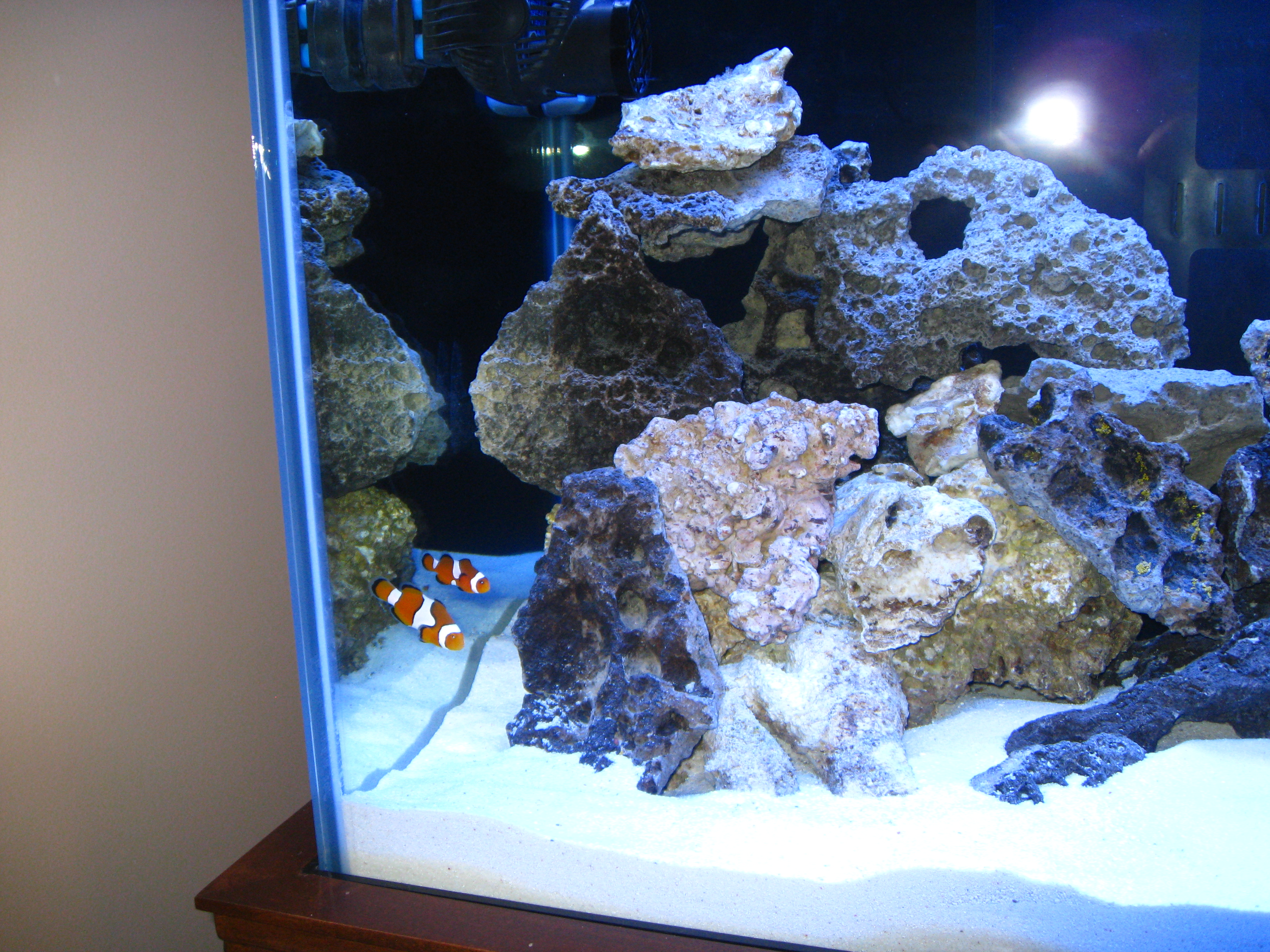 saltwater fish tank nitrate level ve been reading up and
