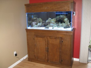 Building a Custom Aquarium Canopy