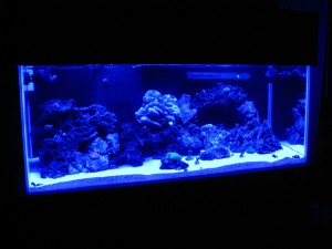 Lunar lighting in a reef tank