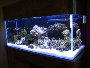 Adding lights to a reef aquarium