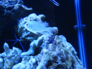 Adding Fish to a Saltwater Aquarium